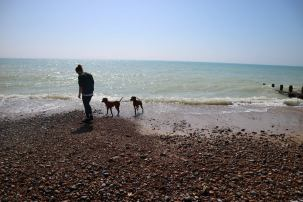 dogs walks and skimming stones 22